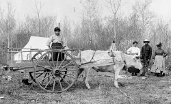 Camp scene of Metis people, a Red River cart and oxen. BAC