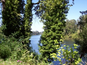 Willamette River at Champoeg © Catherine Jetté