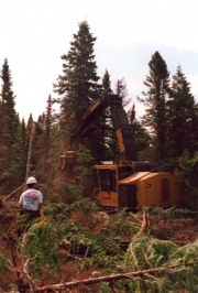 Forestry operations, Rivière Jupiter area, 2001, © Geneviève Brisson