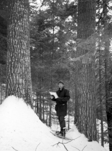 The white pine, a giant of northeastern North American forests