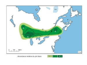 Relative abundance of the white pine 6000 years ago
