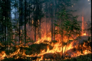 Some Canadian and American national parks have adopted fire as a tool for managing ecosystems.