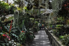 The Tropical Rainforests Conservatory