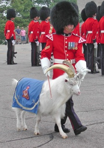 The regimental goat