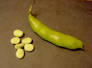 Fresh gourgane beans and pod