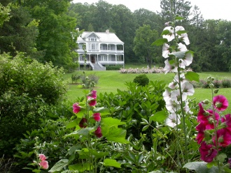 The manor and its bed of hollyhocks