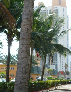 Christmas decoration hanging discreetly from a palm tree
