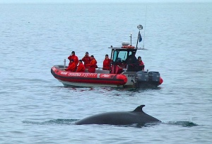 Whale-watching expedition near Tadoussac, 2010